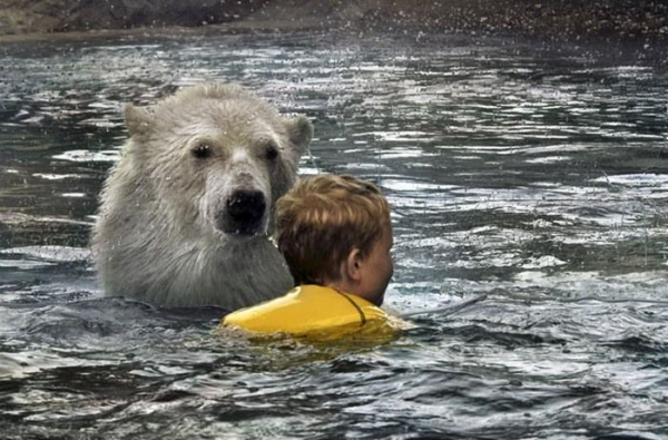 Polar_Bear_Habitat