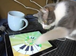 cats-love-ipad